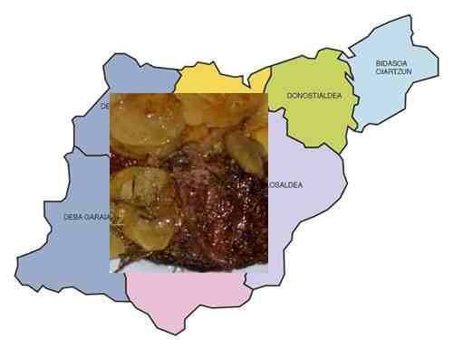 recetas traadicionales provincia guipuzcoa